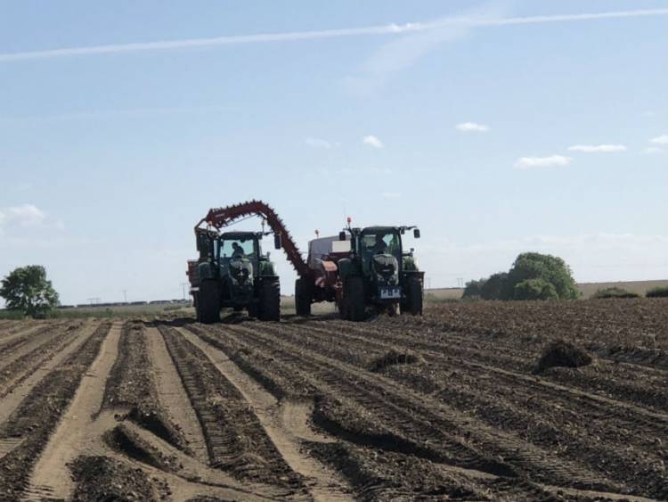 The UK Potato Market – A Farmer's View – November 2019
